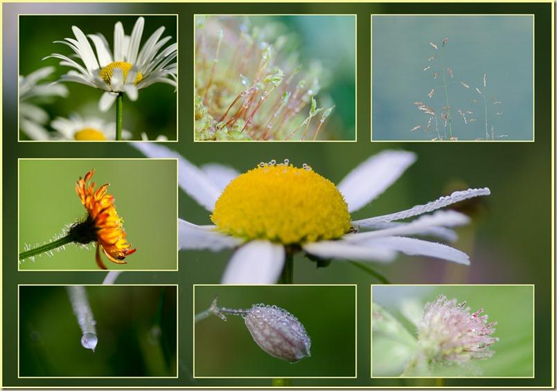 8 Tage, 8 Blumen